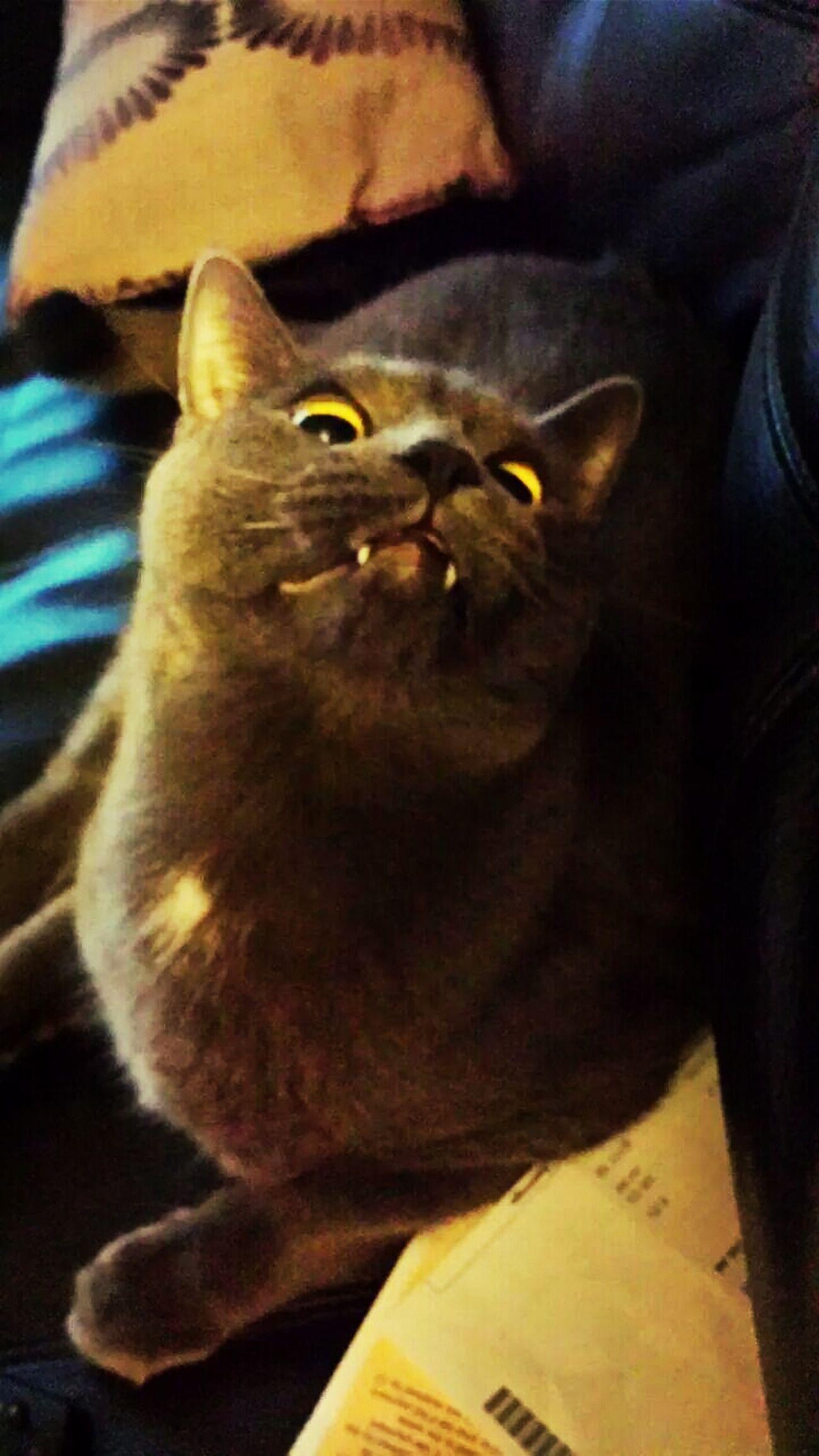 Look Mom I'm A Vampire. Lolx