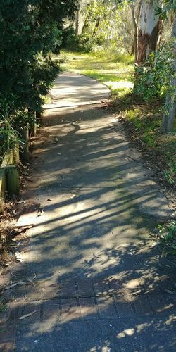Shadow Sunlight Day Outdoors Growth Nature No People Tree Grass Walkway Beauty Beautiful Green