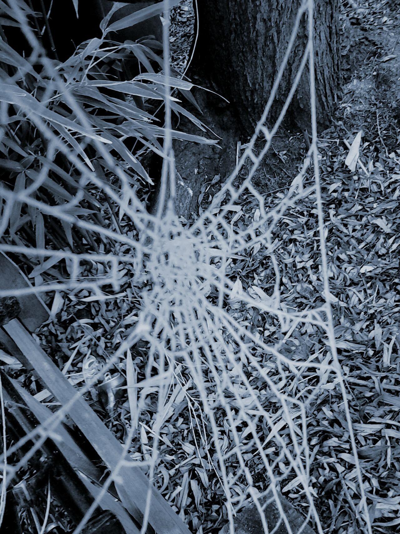 Spidersweb Black & White