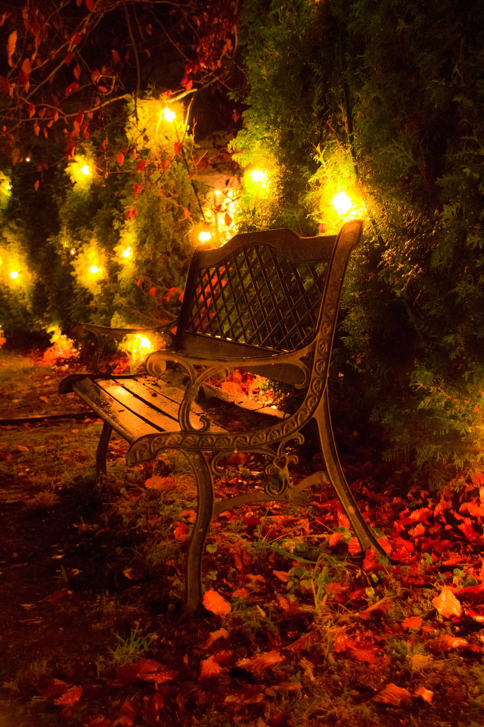 #Christmas #ChristmasLights #christmastime #Dark Clouds #market #nightfall #romantic #tree