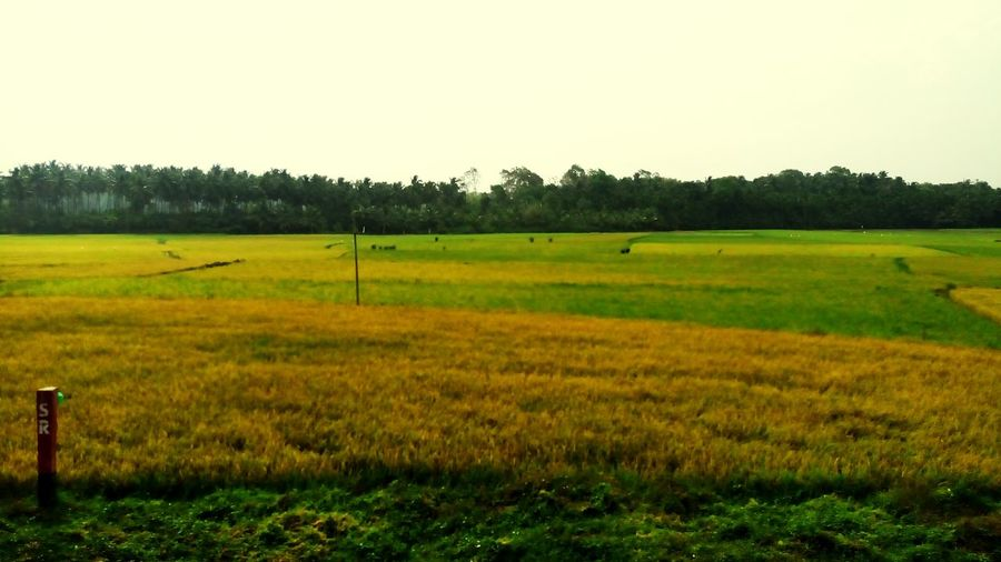 Kerala The Gods Own Country ;) Cheakes Field.