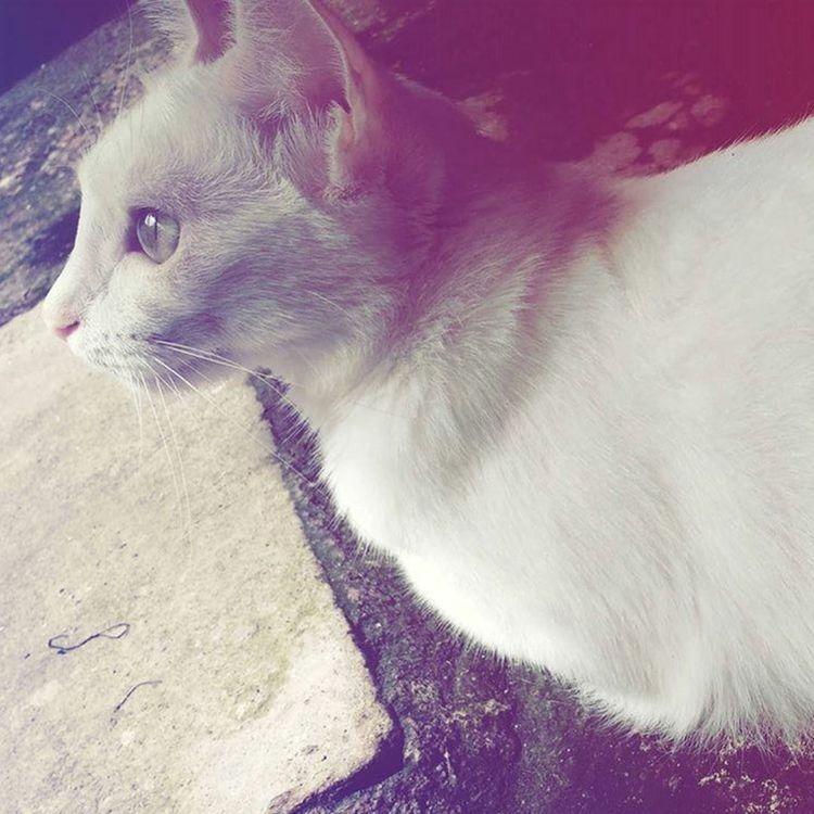 Cat Nina Soobservo
