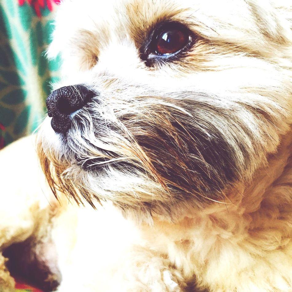 Jacky Dog Pets Lovehim First Eyeem Photo