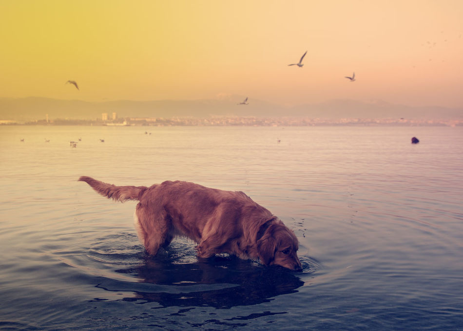 Beautiful stock photos of golden retrievers, Animal Themes, Animals In The Wild, Beauty In Nature, Bird