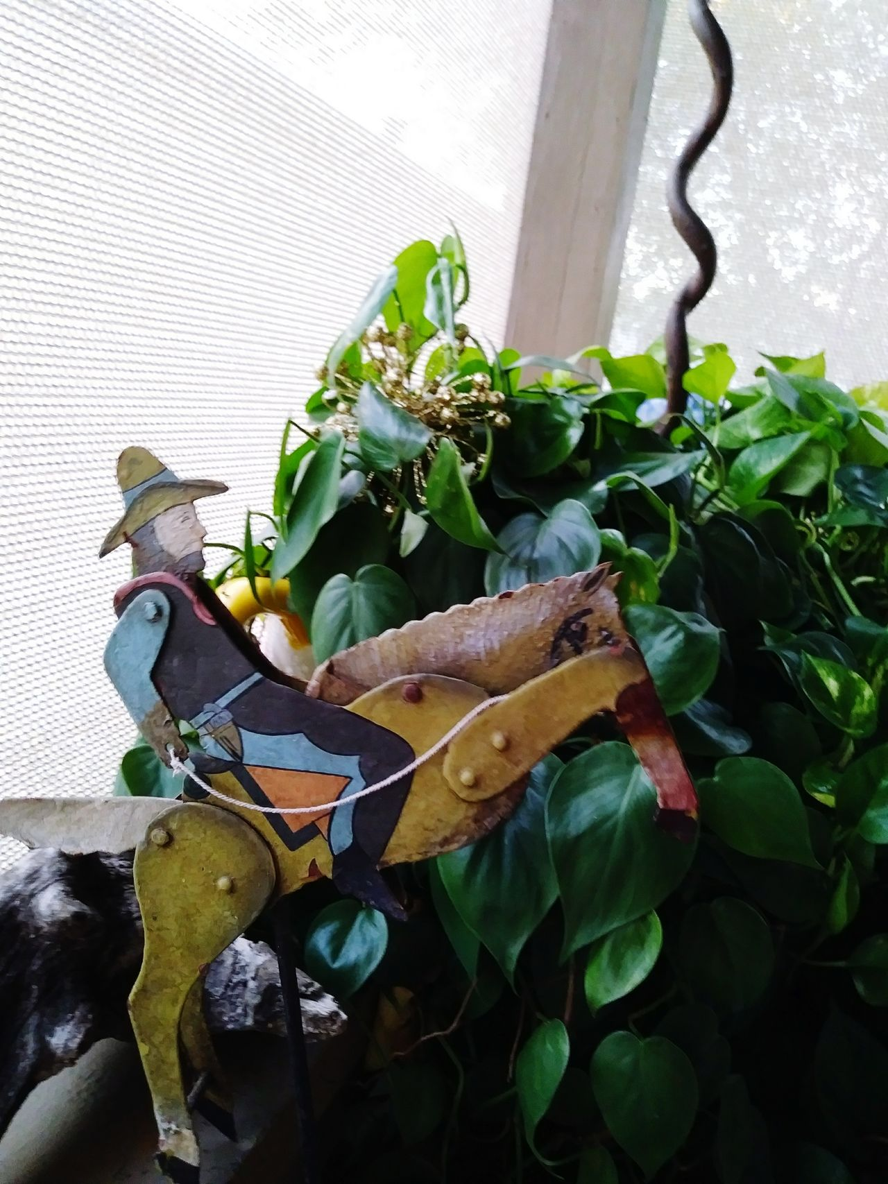 Leaf No People Vegetable Healthy Eating Indoors  Green Color Day Growth Freshness Food Close-up Nature Cowboy Town Cowboy Up Yard Art Porch Life Porch View Yeehaw Yeehaaa Old Toys Antiques Photography Antique Close Up Cowboy Hats  Old Cowboy Style Old Cowboy