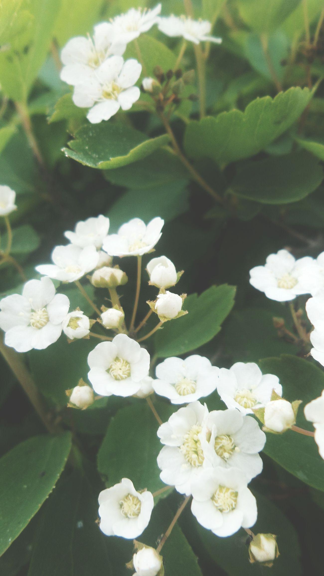 Spring Flowers Spring Bahardalı Green Fresh Lovely Ilkbahar çiçek Anadoluuniversitesi