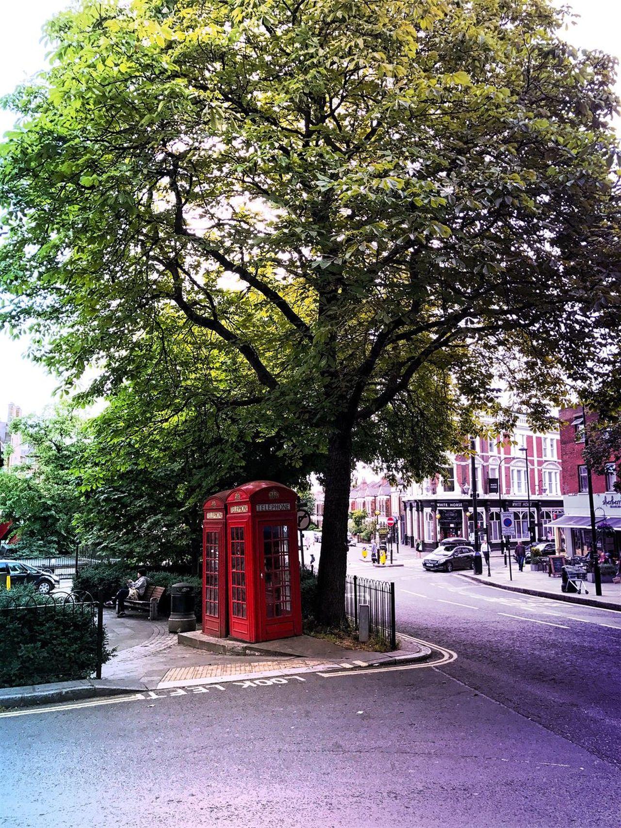 Hampstead Heath Road Tree Outdoors City Walking London Street