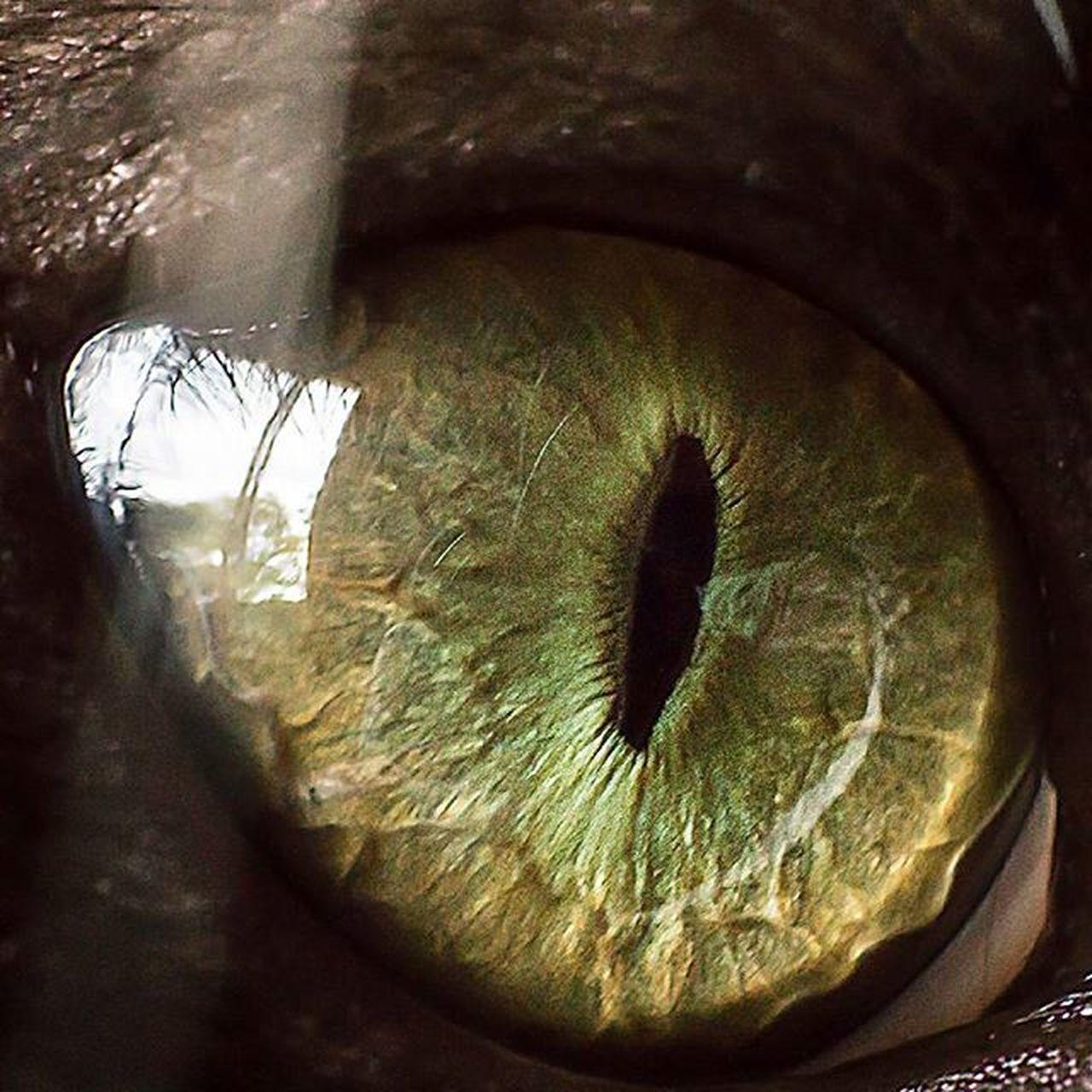 La puerta de tu alma... Mishina Bastardina Cat Eyes Ojos Gato