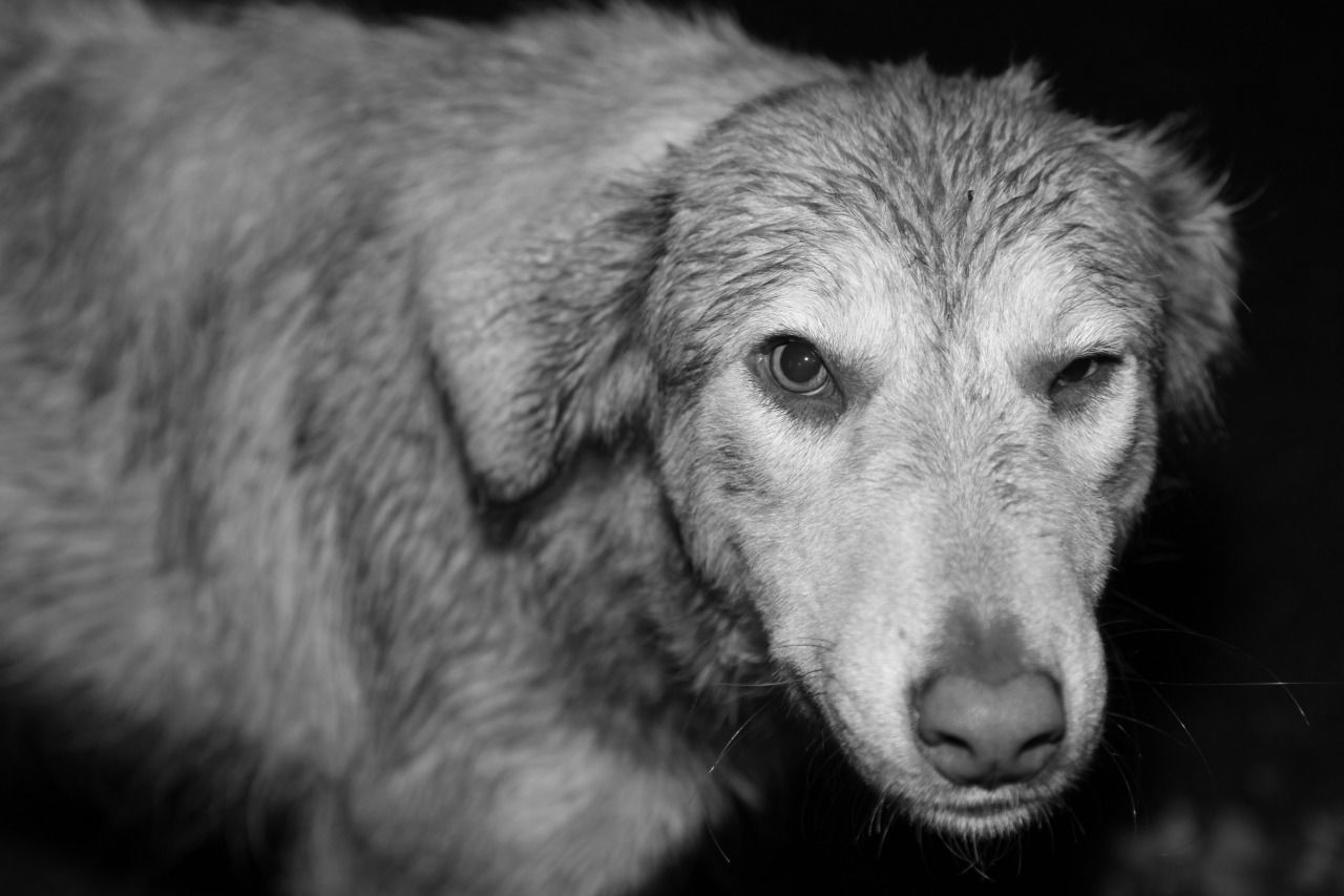 Dog Looking At Camera One Animal Portrait No People Pets Close-up Blackandwhite Photooftheday Streetphotography Love It Wink Tramp Animal Photography Dogs Of EyeEm Dogoftheday Dog Portrait Blackandwhite Photography Canonphotography Nature
