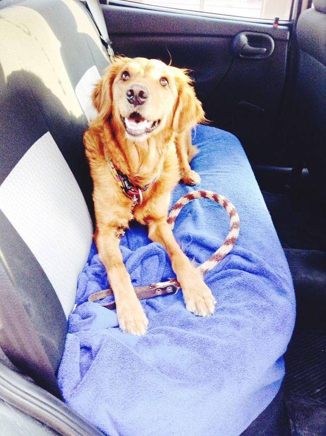 LaMejorPerra Zaashila Cute Pets I Love My Dog Lamejor