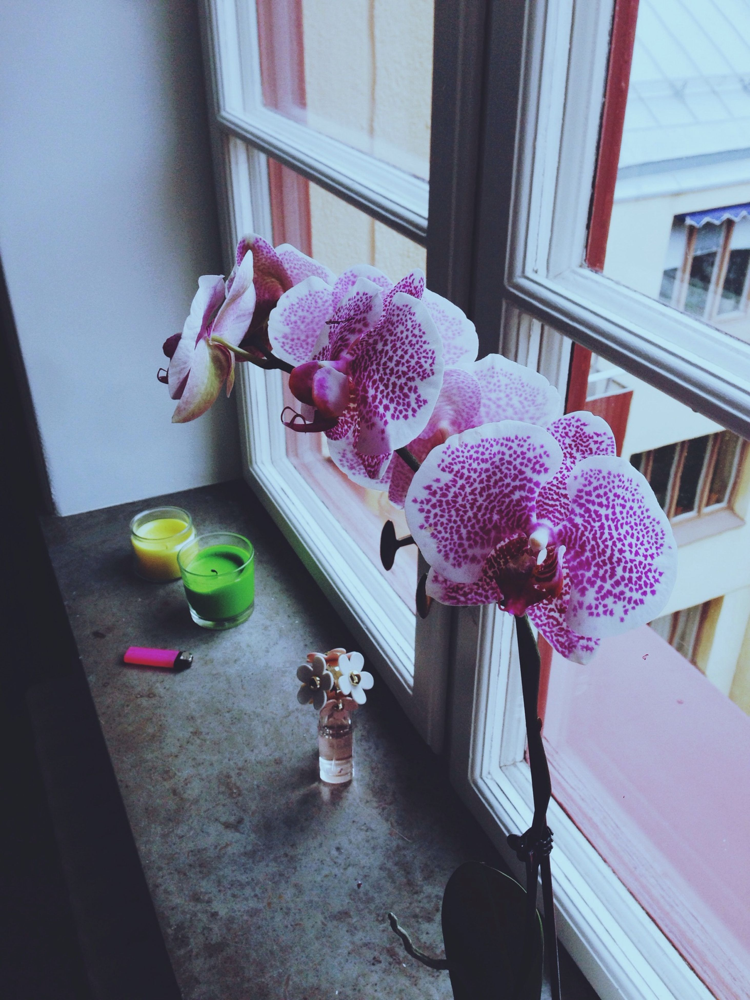 flower, indoors, window, pink color, potted plant, home interior, built structure, architecture, vase, glass - material, freshness, table, fragility, window sill, house, multi colored, flower pot, purple, decoration, plant