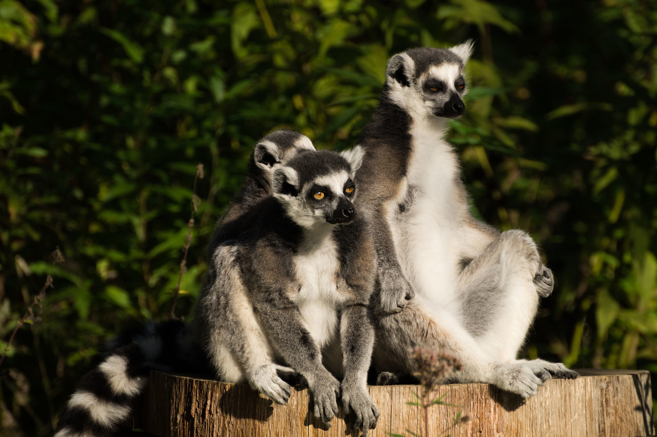 Beautiful stock photos of affe, Animal Themes, Animal Wildlife, Animals In The Wild, Day