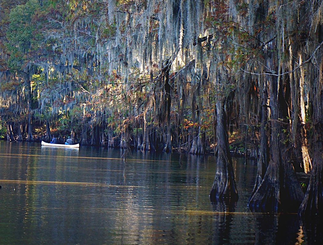 Caddo Lake Tree Nature Water Lake Outdoors Tranquility Tranquil Scene Growth Scenics Beauty In Nature Forest Day Branch Sky Boat