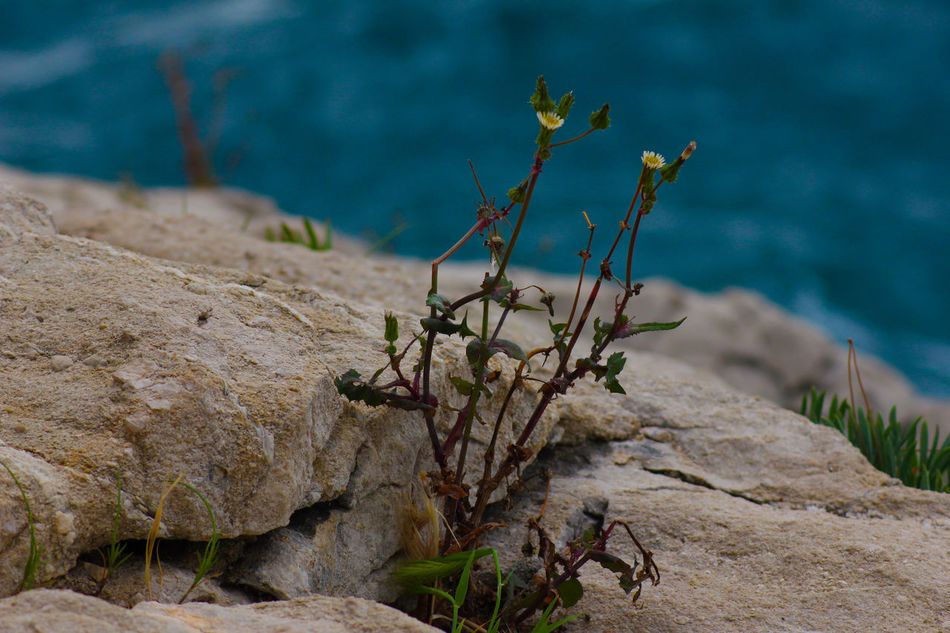 Beautiful stock photos of weed,  Close-Up,  Croatia,  Day,  Horizontal Image