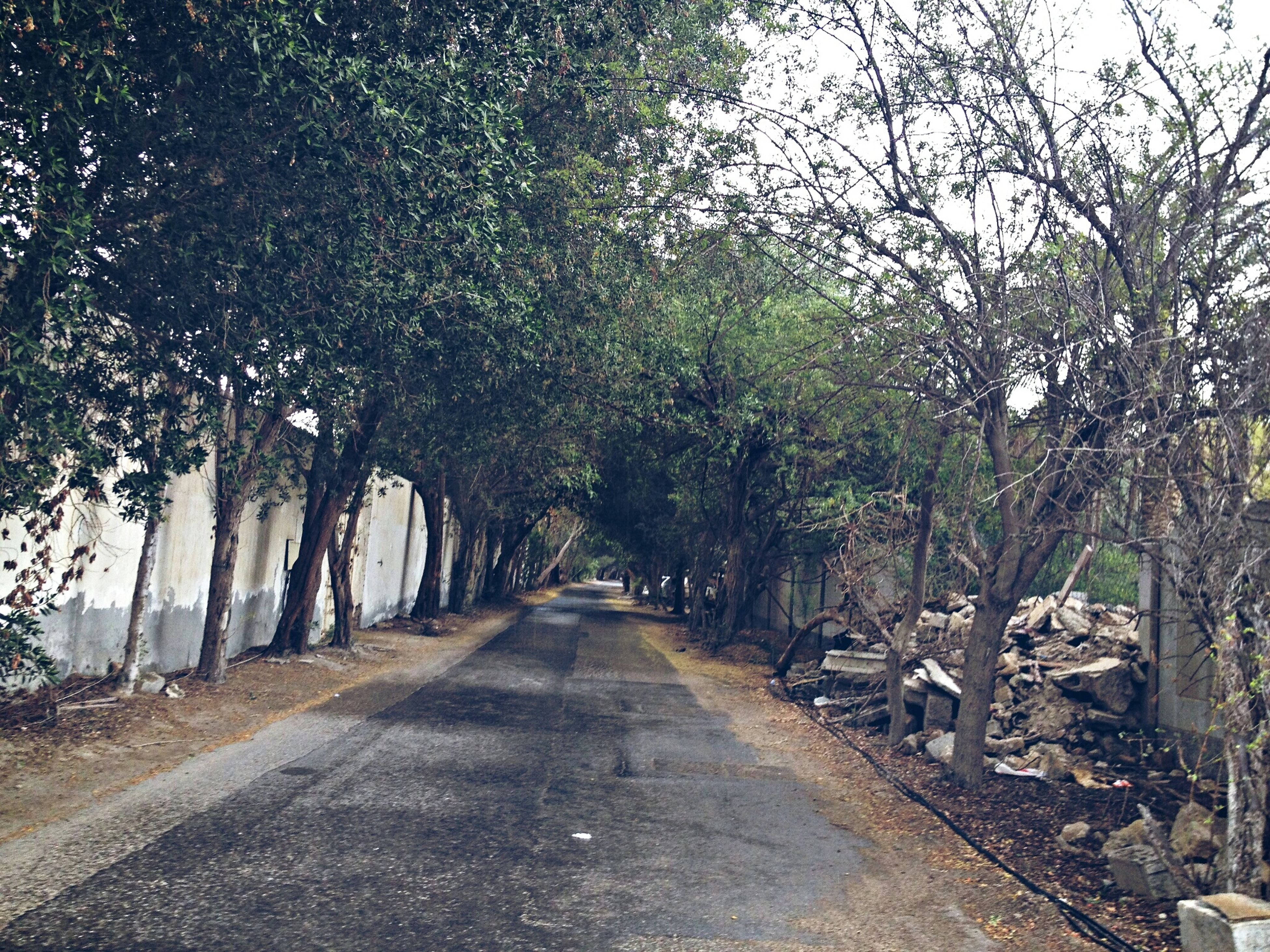 the way forward, tree, diminishing perspective, transportation, vanishing point, road, tranquility, treelined, empty road, nature, growth, tranquil scene, street, branch, day, outdoors, forest, long, no people, sky