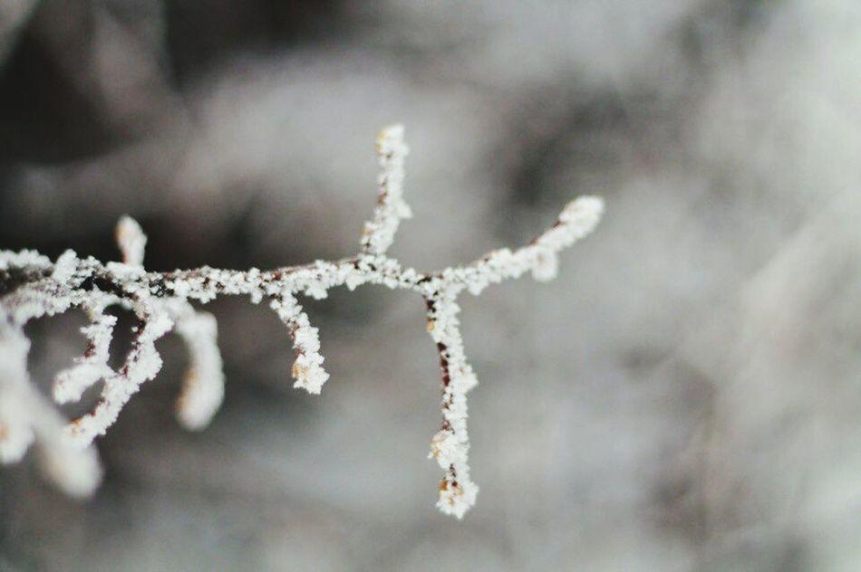 Winter Fairytale  Magic Snow ❄ First Eyeem Photo