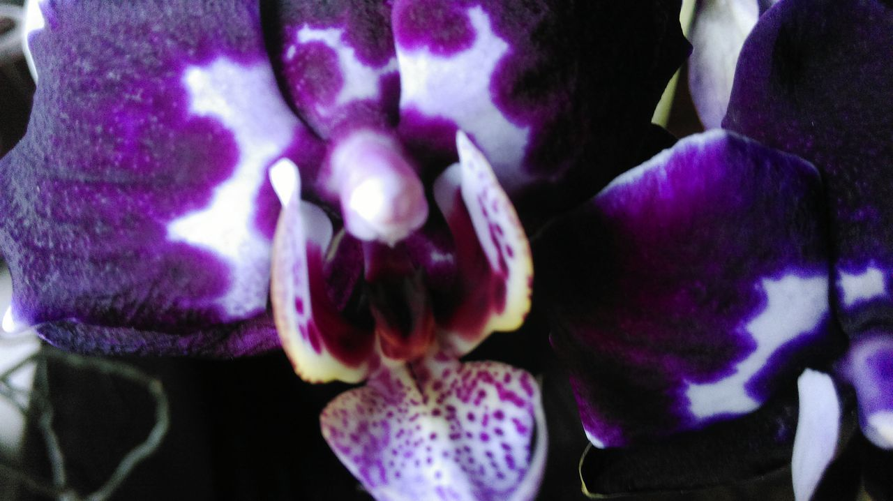 Macro Beauty Orchid Orchidee. Orchidflower At Home Flowers Things I Like Nature's Diversities