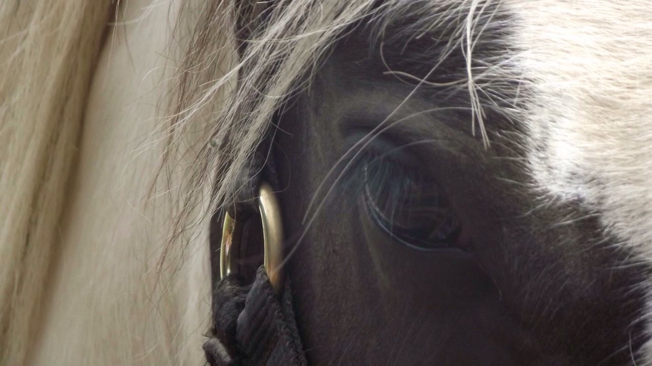 Horse Traditional Cob Equine Equinephotography Equine Photography Eye Equestrian