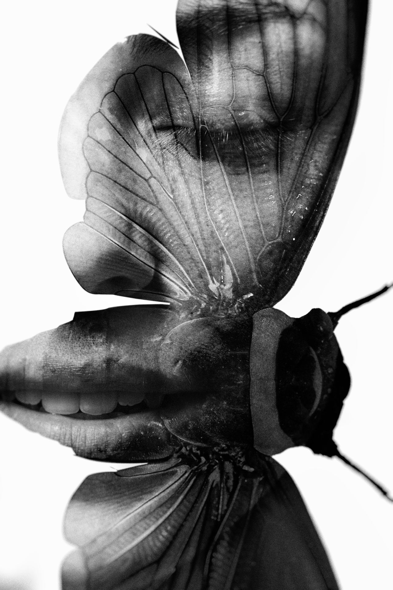 Black And White Photography Blackandwhite Blackandwhite Photography Butterfly Close-up Face Manipulated Manipulation Manipulationphotography Portrait Wings