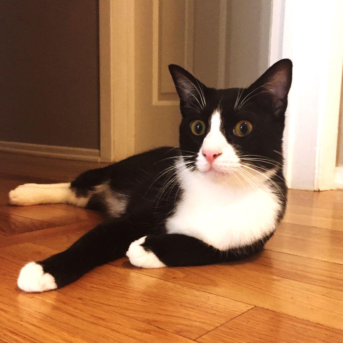 Figaro Cat Catlady Cats Of EyeEm
