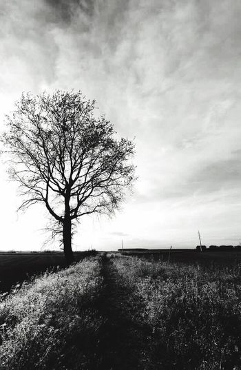 Landscape Tree Tranquility Nature Beauty In Nature Sky Italia