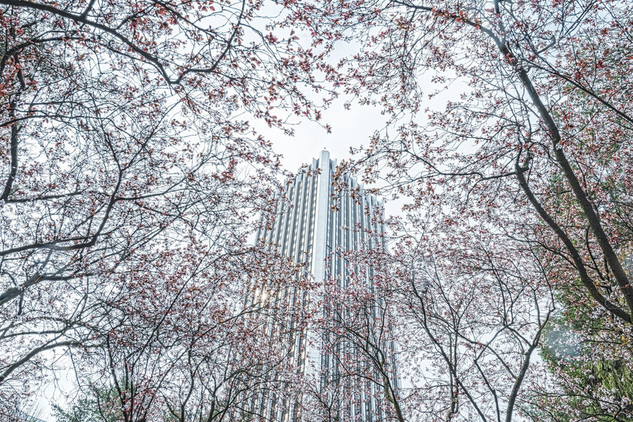 high building behind the trees Among The Trees Backgrounds Beauty In Nature Branch Building City Day Growth LINE Low Angle View Nature No People Outdoors Sky Tall - High Tranquility Tree Tree Trunk