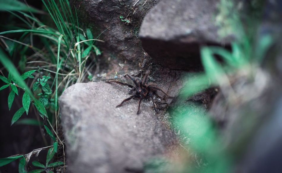 Spider One Animal Animal Themes Insect Plant Animals In The Wild Nature Outdoors Day Close-up Grass No People