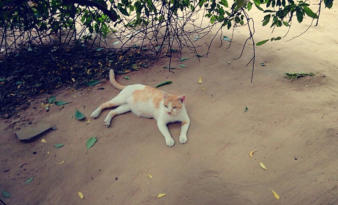 just chilling around the campus Cat Relaxing Nature Pet Campus Campuscorner Cats Of EyeEm Orange And White Cat Leaves Shade Comfortable