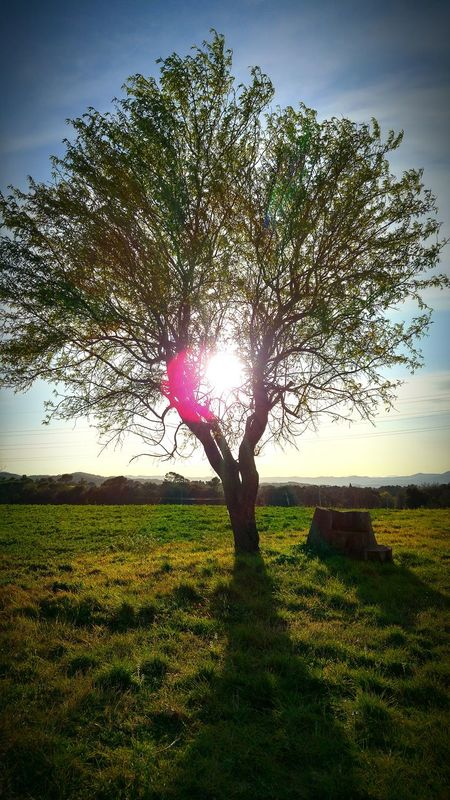 árbol Solitario Pensamientos Belleza Absoluta