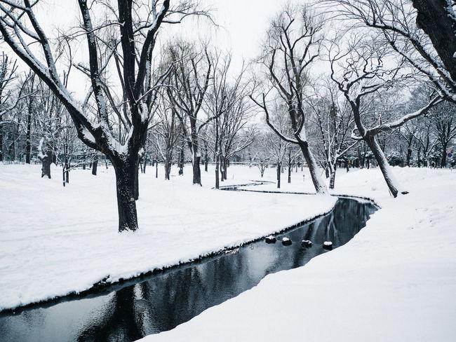 Sapporo, Hokkaido, 2016 Day Hokkaido Japan Landscape Outdoors Sapporo Snow Ultimate Japan Winter