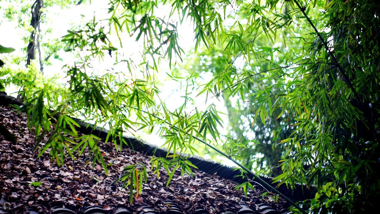 Green Color Nature Growth Forest Beauty In Nature Leaf Outdoors Tree Plant Day Freshness