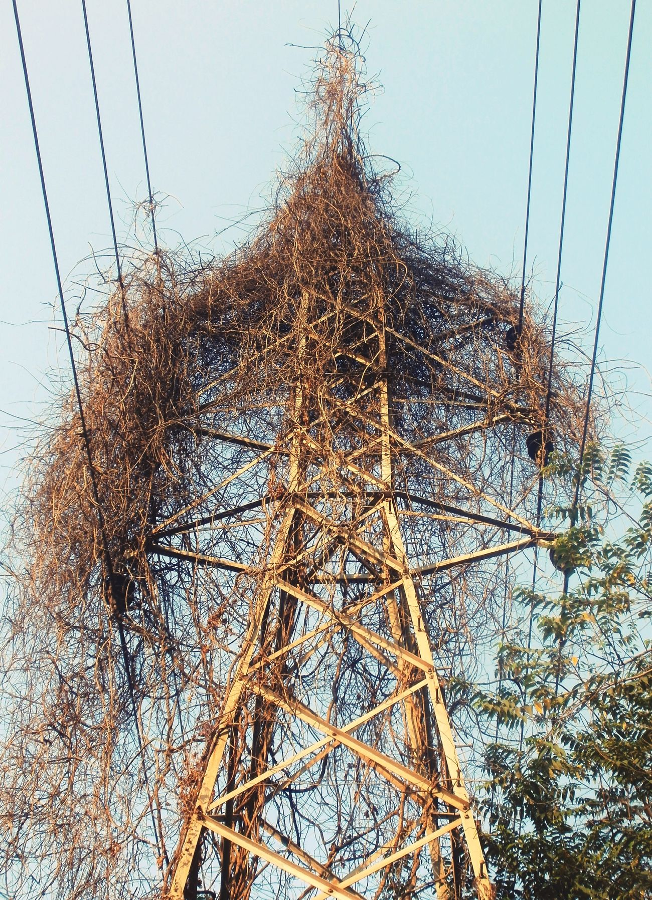 Hanging Out Electric Tower  Electricity Pylon old guy