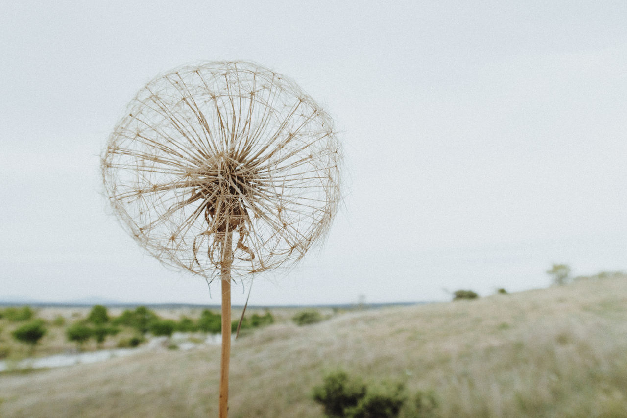 Beauty In Nature Clear Sky Close-up Dandelion Dandelion Seed Day Dry Dry Flower  Field Flower Flower Head Landscape Nature No People Outdoors Sky