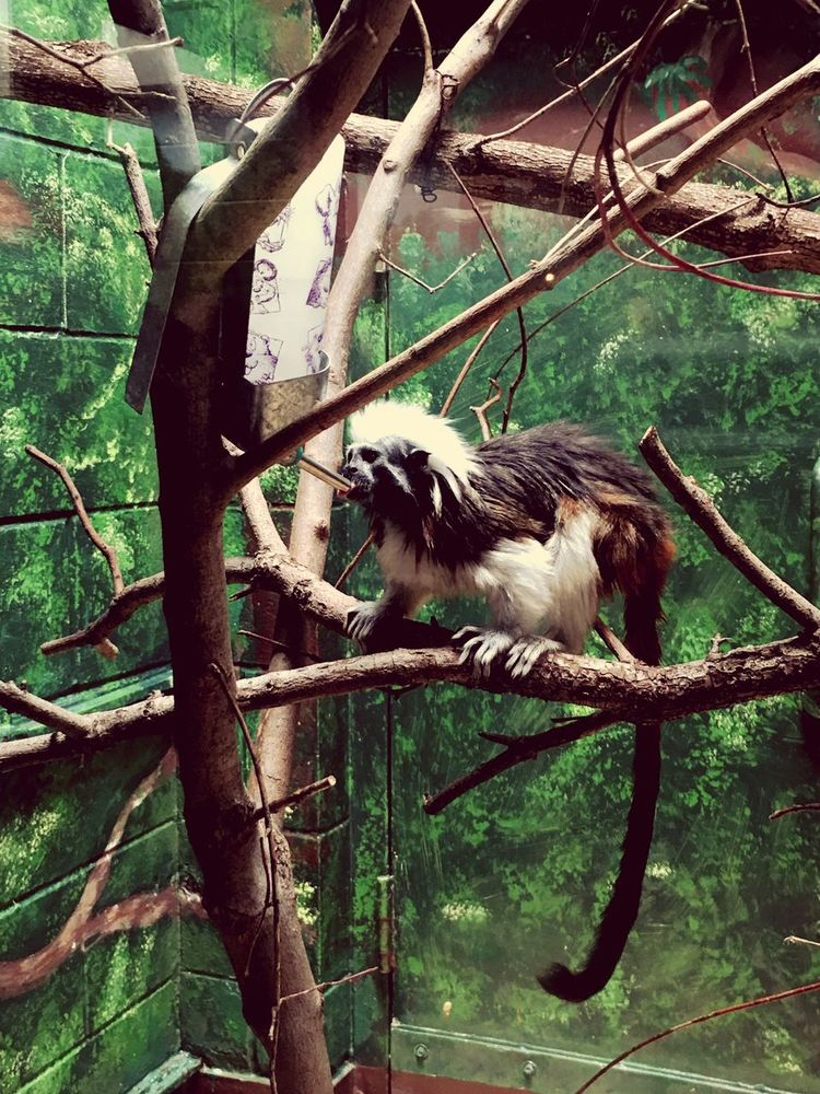 Animal Themes One Animal Animals In The Wild Wildlife Bird Tree Side View Branch Zoology Tree Trunk Nature Day Green Color Bird Of Prey No People Tranquility