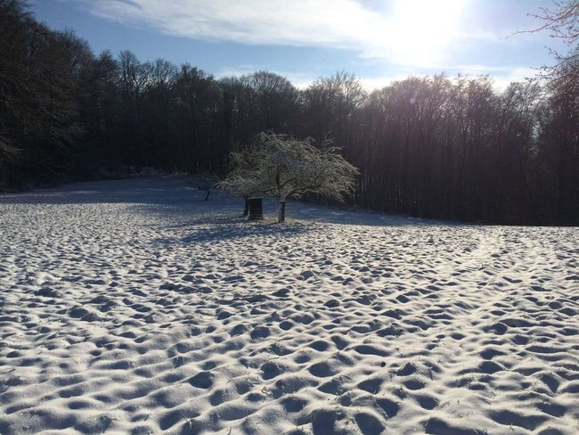 Odenwald  Have A Walk Snow
