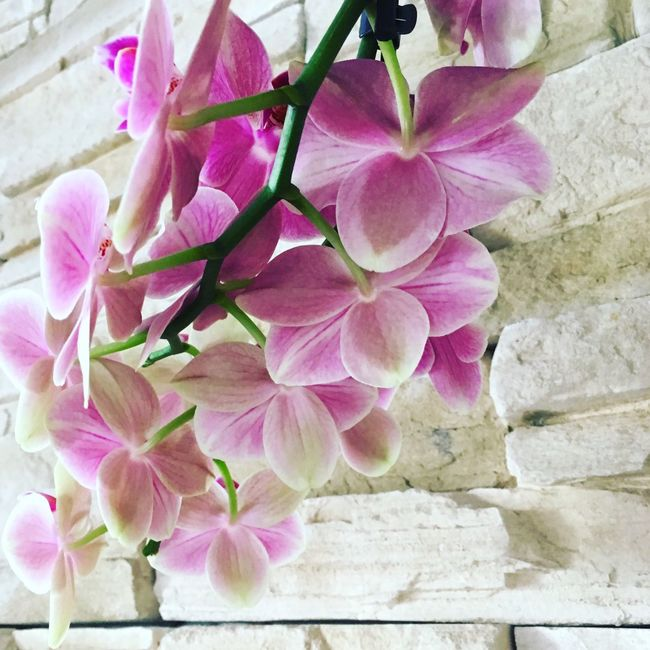 Orchid Eyem Gallery Flowers Flower Collection Flowerslovers Flower Photography Flower_Collection Pink Flowers Orchid Blossoms Orchid Flower