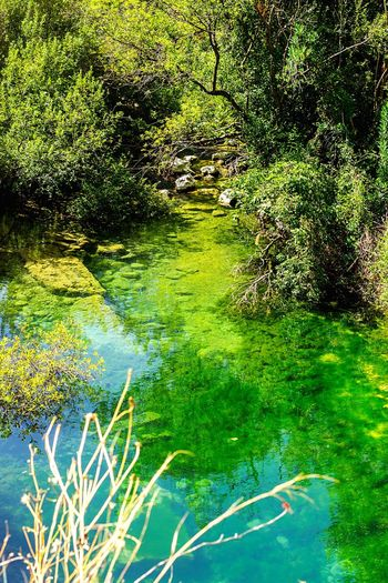 Water Nature Pantalica Riserva Naturale Beauty In Nature Green Color River Tree Outdoors Tranquility Excursion Nature Photography Sicilia Wildlife Wildlife & Nature Beautiful Place Siracusa Sicily Wildlife Photography RNO Siciliabedda Green Nature Tranquil Scene Beauty In Nature Floating On Water