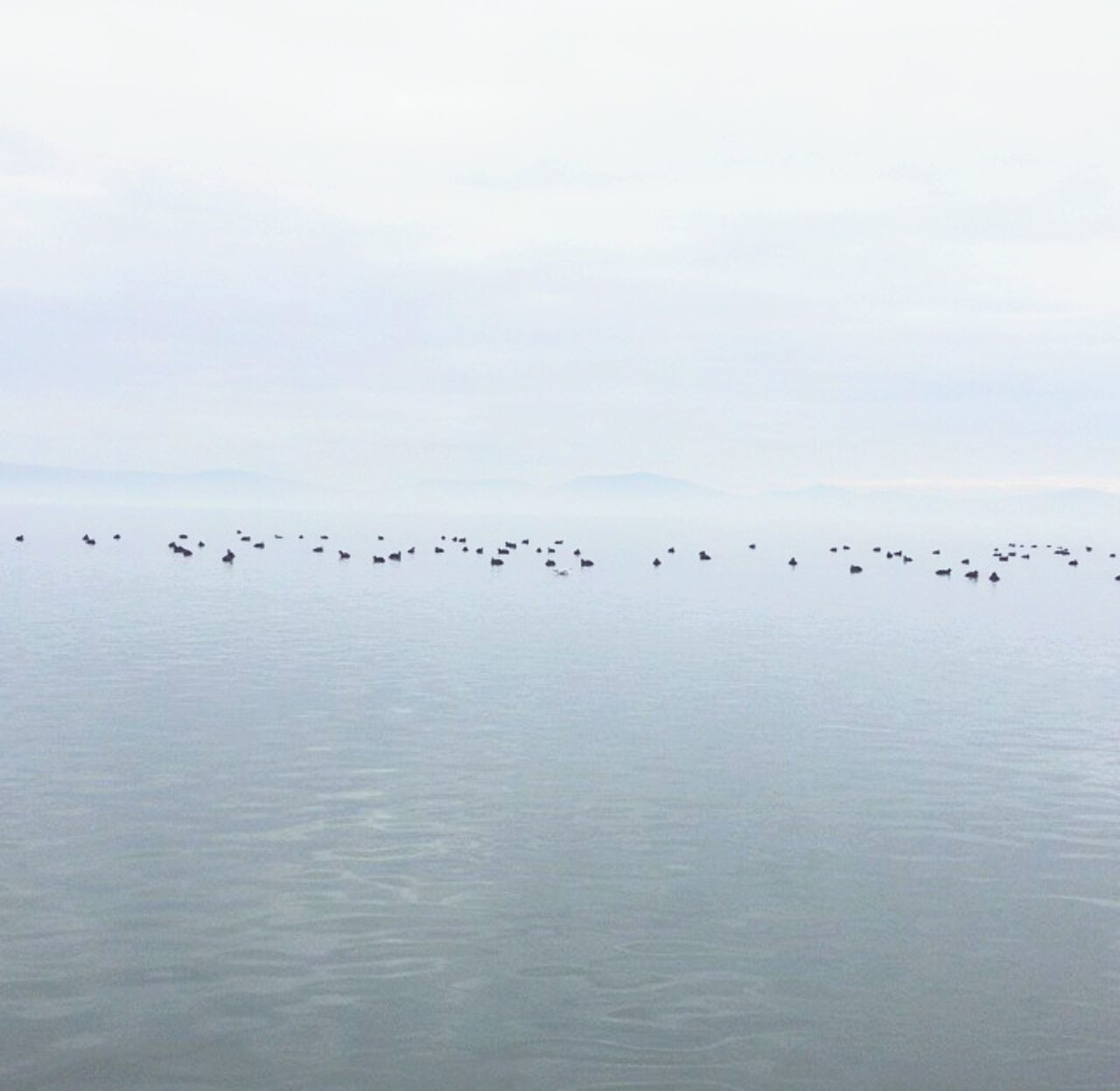 Sky Beauty In Nature No People Nature Day Horizon Over Water Lake Trasimeno Landscape Cloud - Sky Nature Peace And Quiet Skyandlake Uccelli Uccellini Uccelli In Volo Photography Photo PhonePhotography Large Group Of Animals Bird Sunset Flock Of Birds Idyllic Flying Animals In The Wild