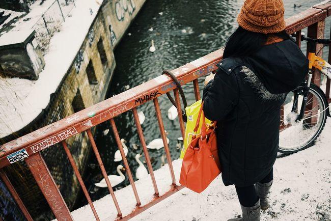 Feeding the birds // Berlin Winter Wonderland Feed Me Swan Swans Winter