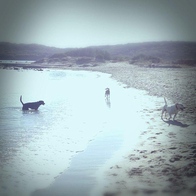 #bia #biathevegandog #vegandog #blackdog #sardegna #canenero # Sardegna Bia BlackDog Biathevegandog Canenero Vegandog