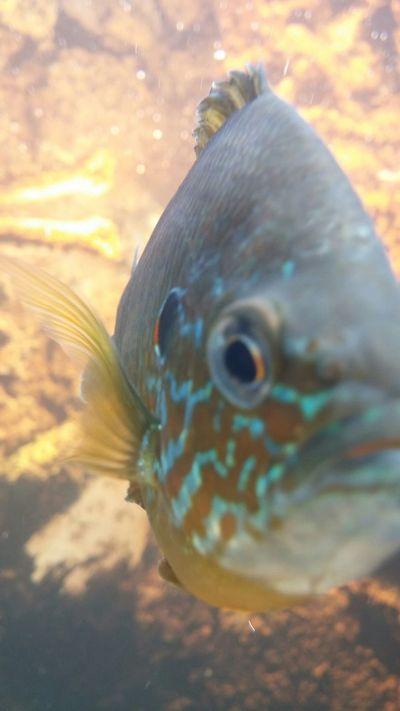 So interested in me Botanical Gardens Buffalo Fish 🐠