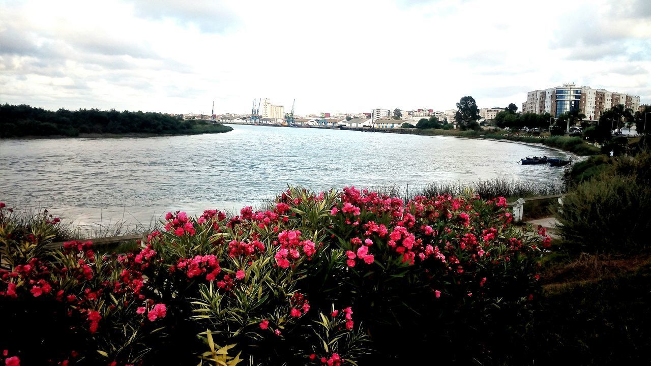 flower, water, built structure, sky, nature, growth, architecture, river, cloud - sky, beauty in nature, building exterior, outdoors, day, city, no people, plant, skyscraper, freshness, cityscape, fragility, travel destinations, scenics, tree, urban skyline, flower head