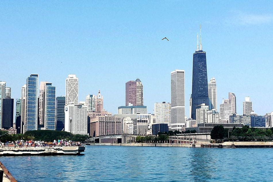 Beautiful stock photos of chicago skyline, Animal Themes, Architecture, Bird, Building Exterior
