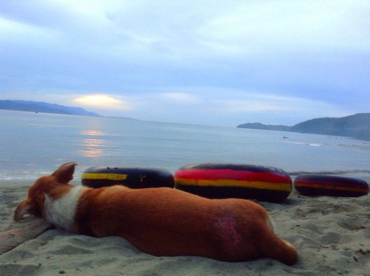 Dog Papua Beach Amay Beach Jayapura Papua Holandia Beauty In Papua World LovePapua Wonderfull Holyday Nature Paradise Sea