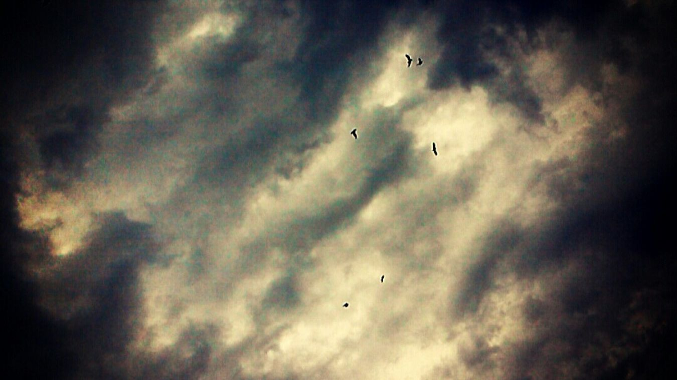 Sky Skyporn Artinsky Birds Flying High InTheSky Feeling Thankful Feelingfree😆 Skylover Naturelovers Skyisamazing Everythingisawesome Lovelovelove