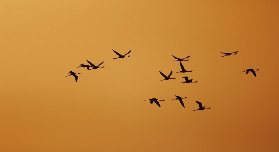 On Air Flemingo Air India Surat_igers Surat Photography Dumas Surat Sihouette  Birds Bird Photography Gujarat Abstract Canonphotography Canonindia