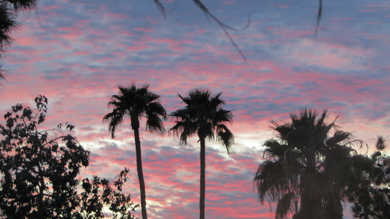 tree, palm tree, beauty in nature, nature, silhouette, growth, scenics, sunset, sky, tranquility, no people, tranquil scene, outdoors, tree trunk, day