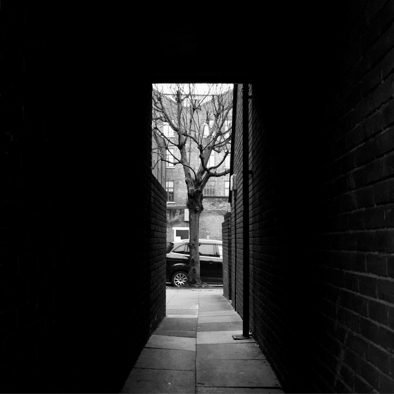 Architecture Built Structure Bare Tree Tree No People Entrance The Way Forward Day Building Exterior Indoors  Sky EyeEm Gallery EyeEm Best Shots This Week On Eyeem London Outdoors Streetphotography Residential Building Alley Blackandwhitephotography Dark Alleyway Bricks