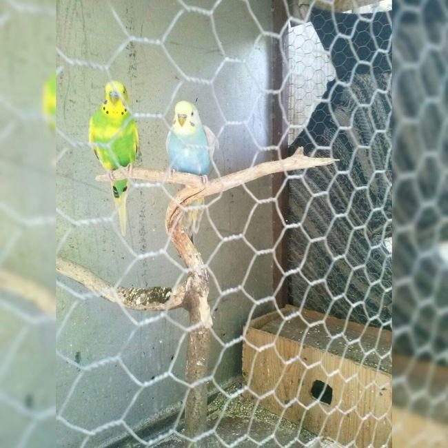 Birds Mypic Byme Catitas Nature