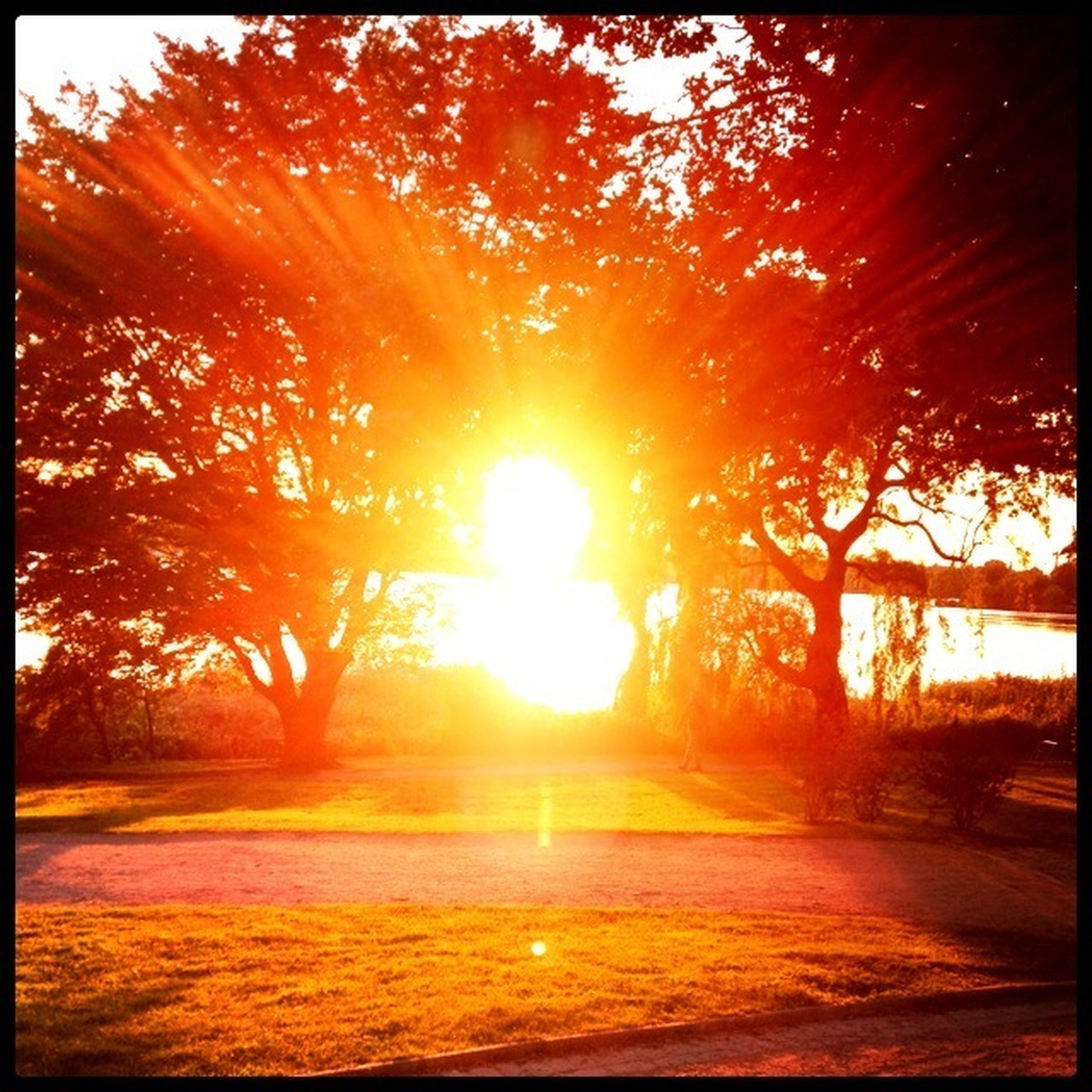 sun, tree, sunset, sunlight, sunbeam, orange color, tranquility, transfer print, tranquil scene, beauty in nature, lens flare, scenics, auto post production filter, nature, growth, idyllic, sky, outdoors, branch, no people